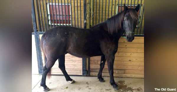 Kennedy is now homed with former caisson soldier Carroll Urzendowski.