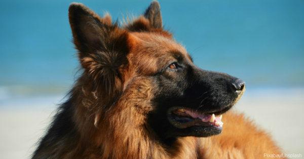 dog-1209914_1920