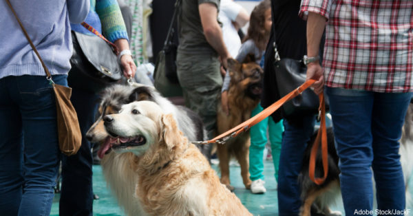 Dogs and their owners at exhibition