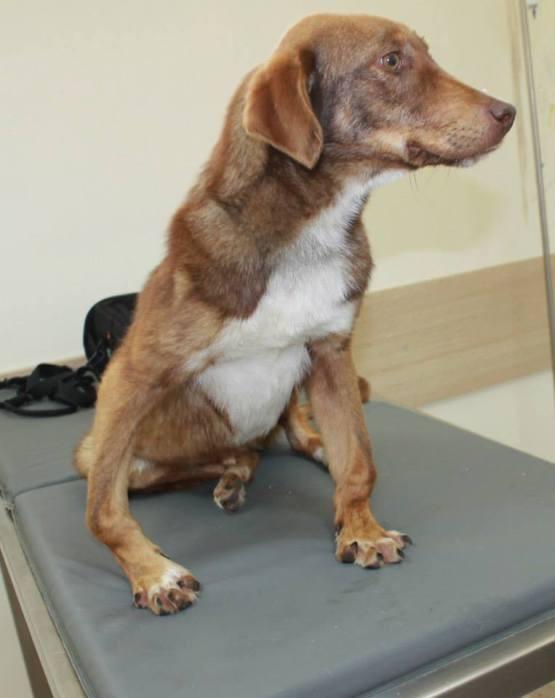 Rudozem Street Dog Rescue
