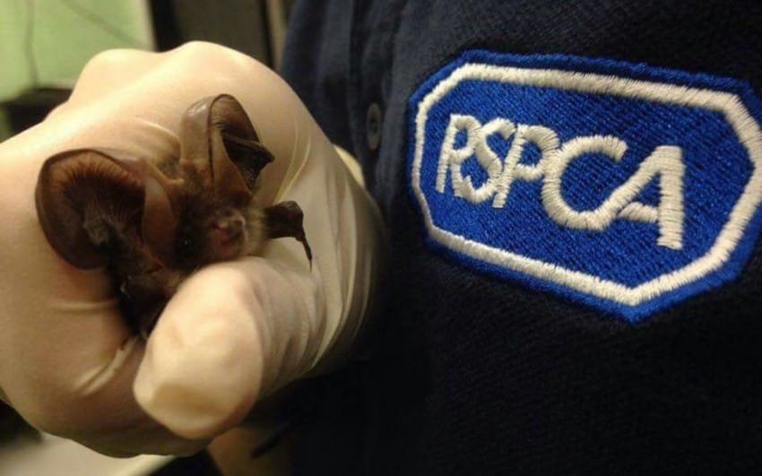 Photo credit: RSPCA West Hatch Wildlife