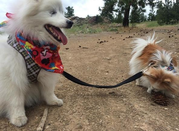 PHOTO CREDIT: INSTAGRAM/THE.FLUFFY.DUO