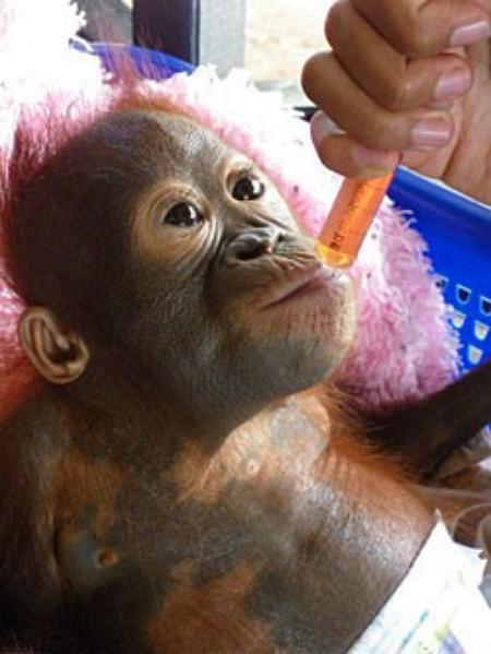 Photo credit: International Animal Rescue