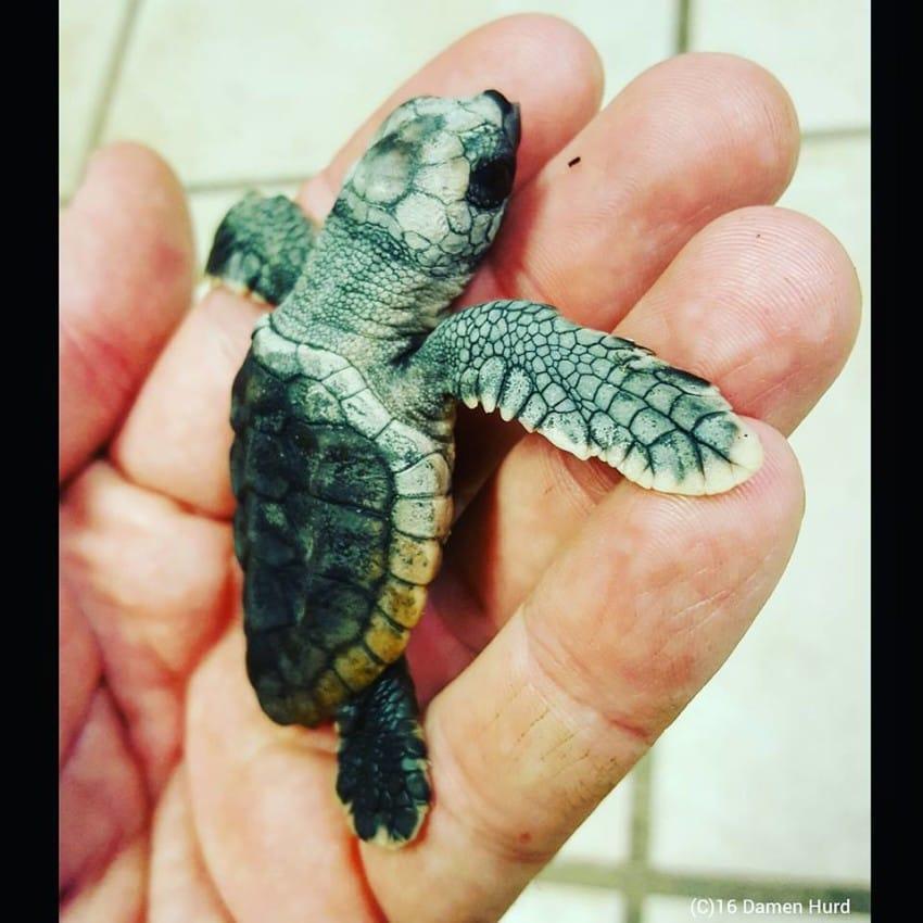 Photo credit: Wildlife,Inc. Education & Rehabilitation Center