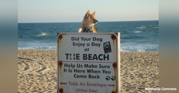 beach-dangers1