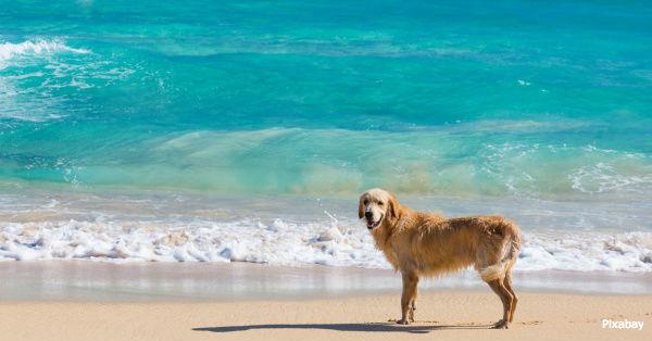 beach-dangers2