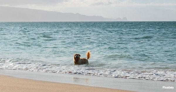 beach-dangers3