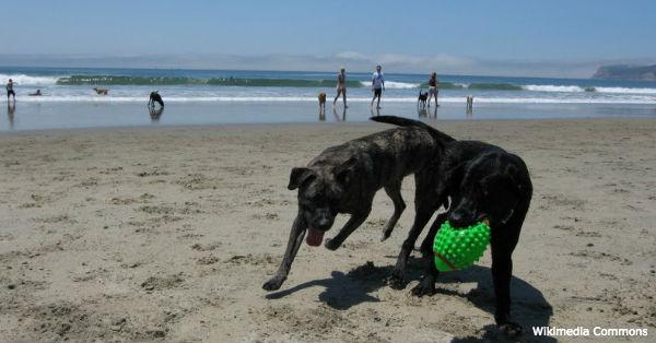beach-dangers4