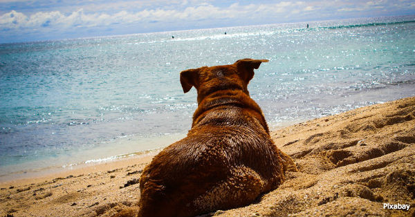beach-dangers5