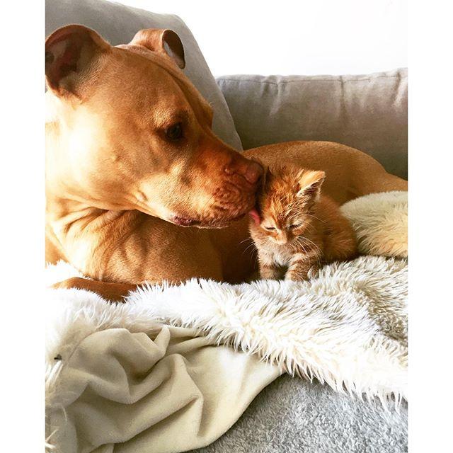 Instagram: bubbalovesrue