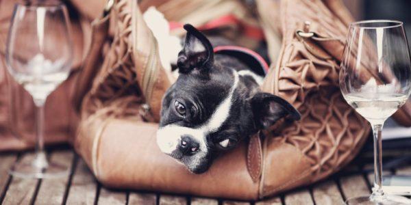 dogwine2