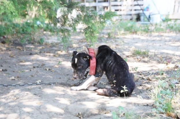SPCA Texas