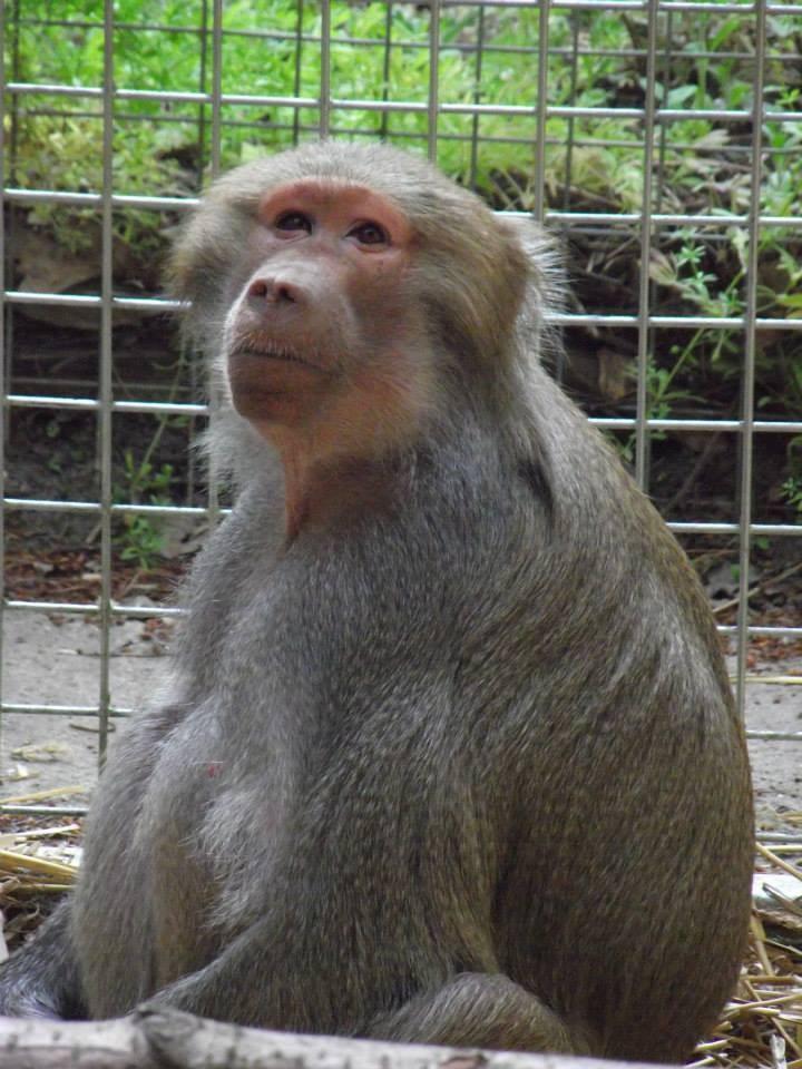 Lakeview Monkey Sanctuary