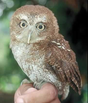 Photo credit: Center For Biological Diversity