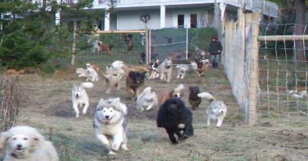 Acre Enclosure For Rescue Dogs