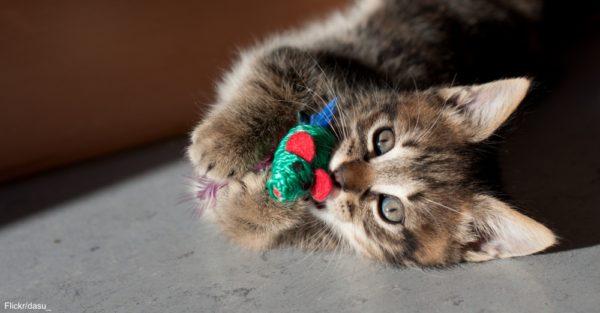 KittenToy