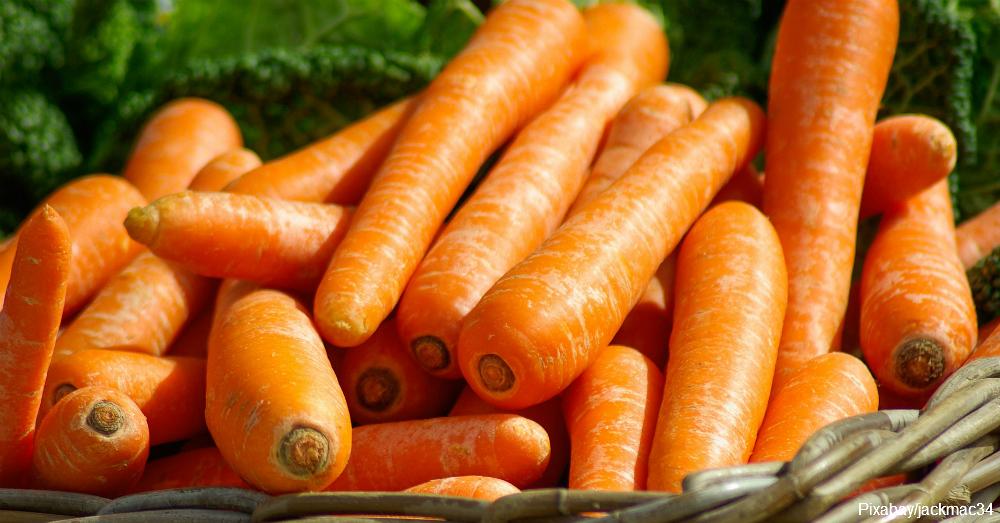 carrot1