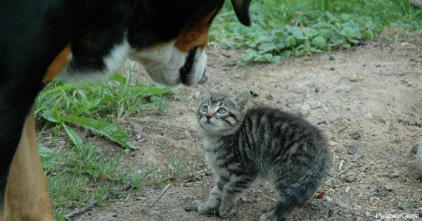 cat1-4