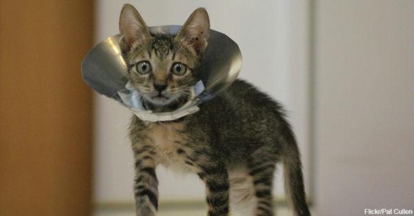 cat3-2