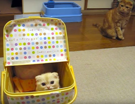 Ganmo the cat notices something strange in the basket...