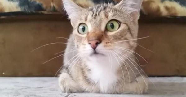 horror-cat