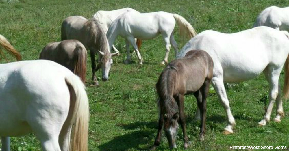 horse1b