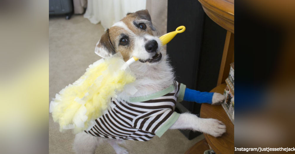 Jesse The Jack Demonstrates How To Get Your Dog To Lend A