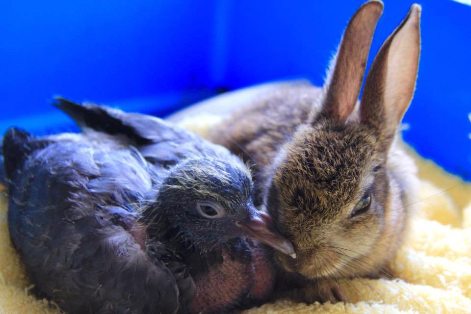Kildare Animal Foundation Wildlife Unit