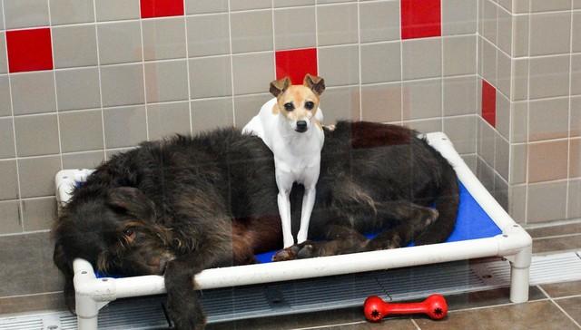 Animal Rescue League of Iowa