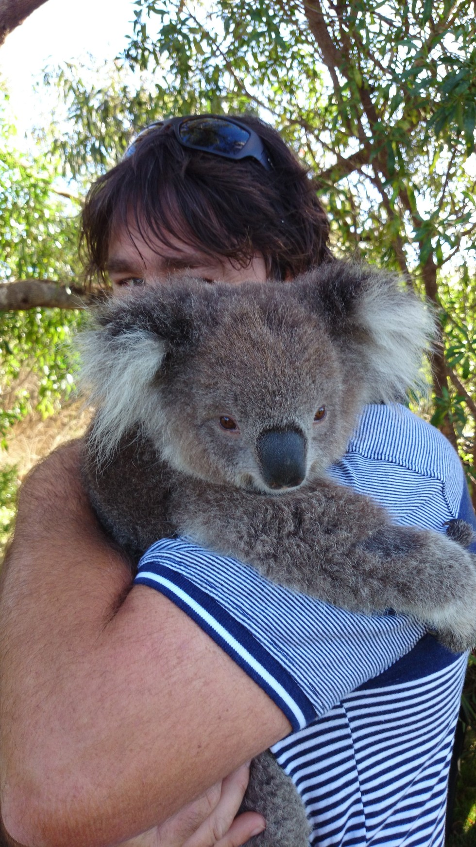 RAYMOND ISLAND KOALA AND WILDLIFE SHELTER