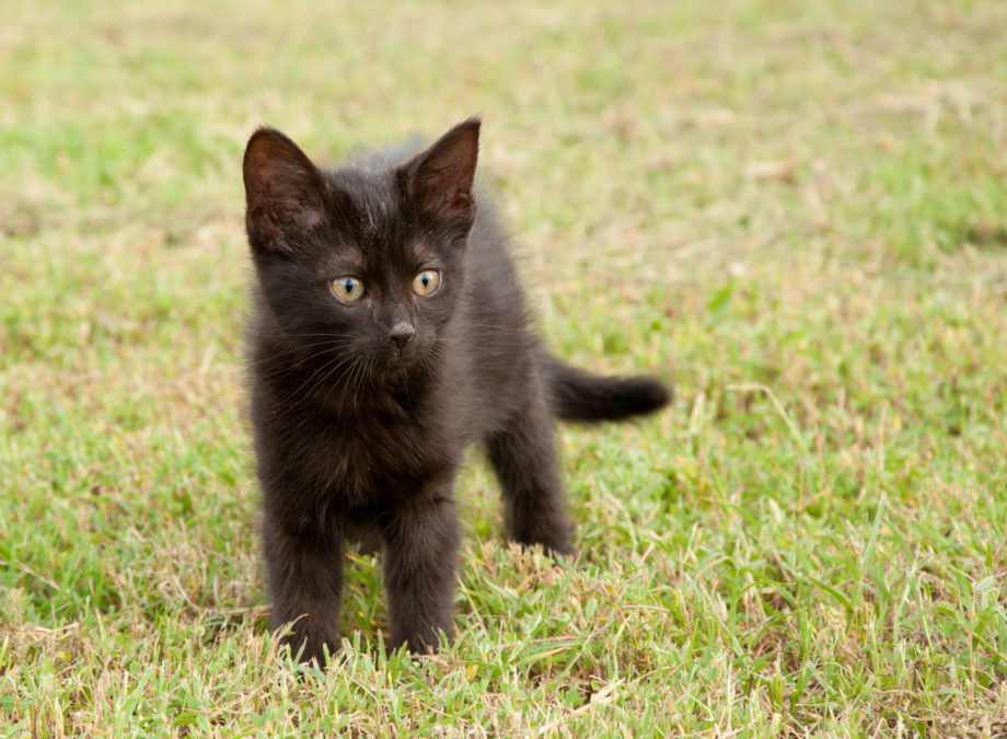 Black kitten in grass, with an alert look on her face