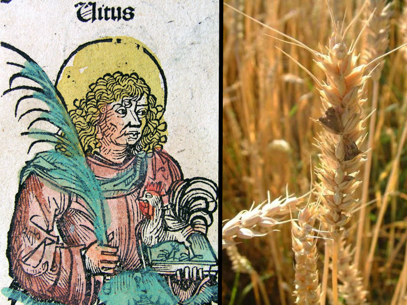 Modern theories suggest religious hysteria caused by famine (Saint Vitus pictured left) and ingestion of Ergot