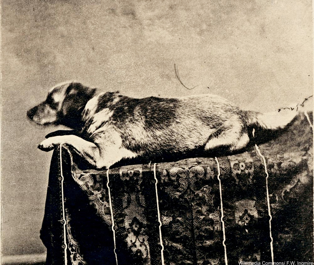 Fido, Abraham Lincoln's Dog