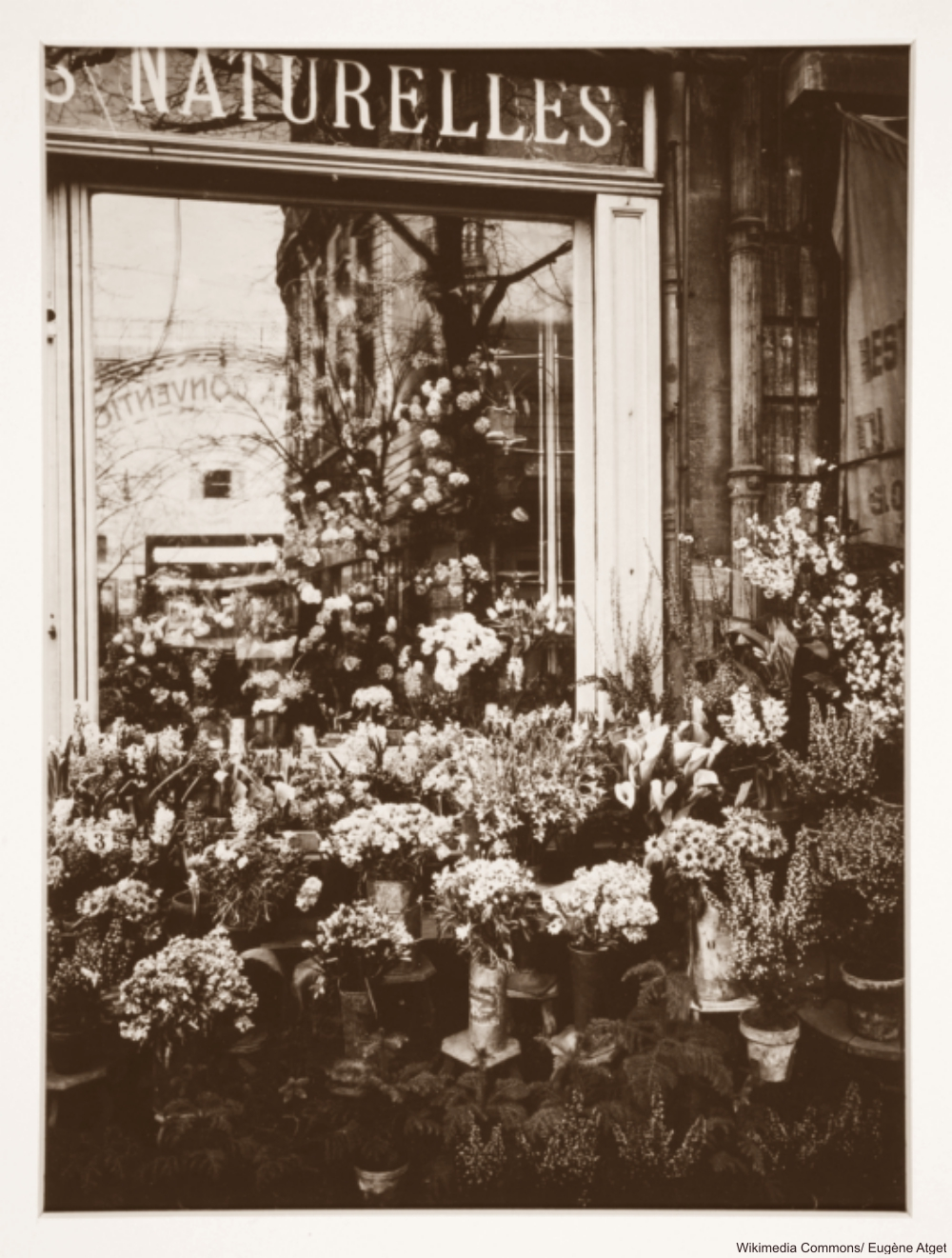 Parisian Flower Shop Window 1920s