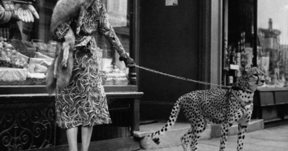 phyllis gordon pet cheetah