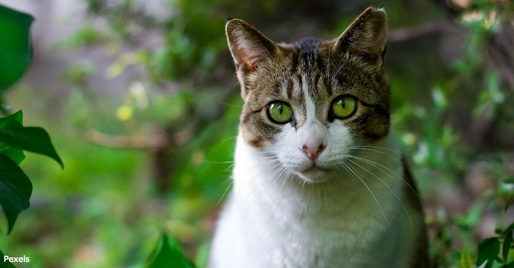cat-compassion1