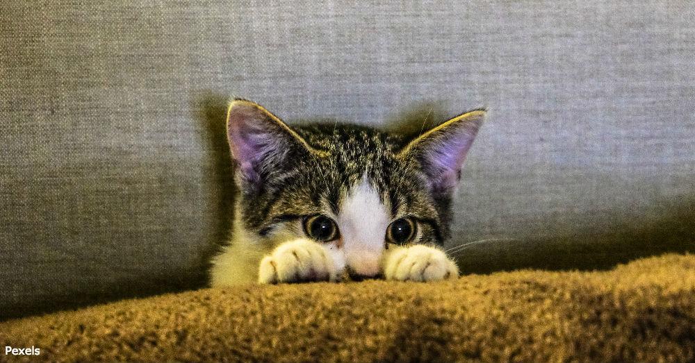 cat-compassion2