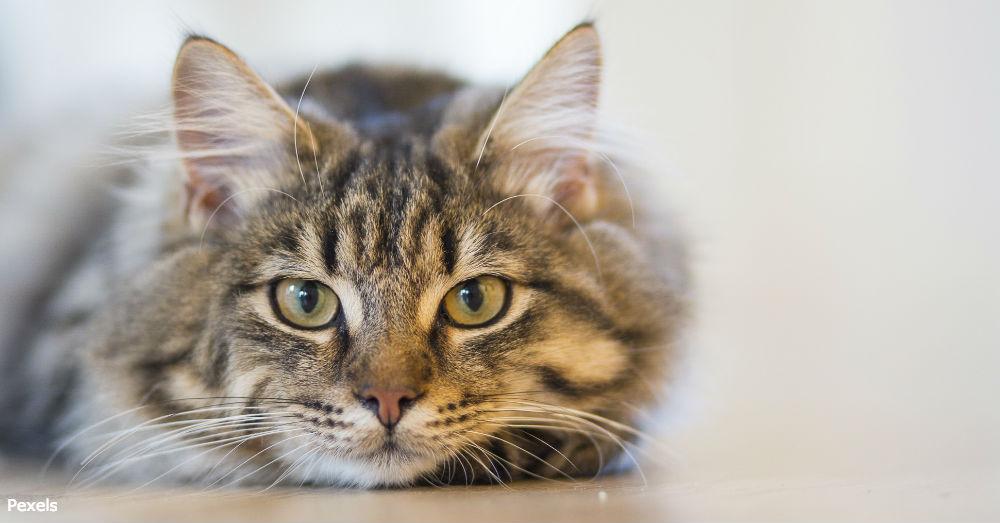 cat-compassion3