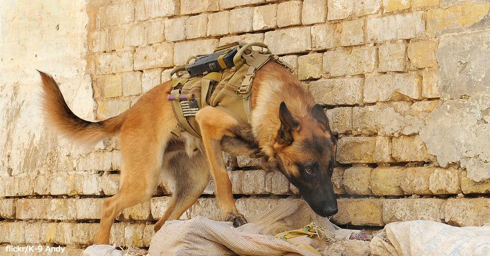 dog-ecomm3