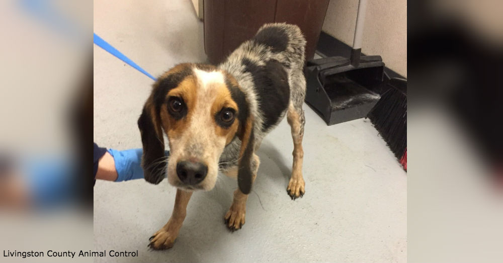 The three living beagles, while emaciated, are expected to make full recoveries and hopefully be adopted out.
