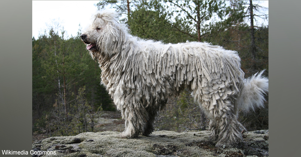 Hold Onto Your Jowl Horses 16 New Dog Breed Names That