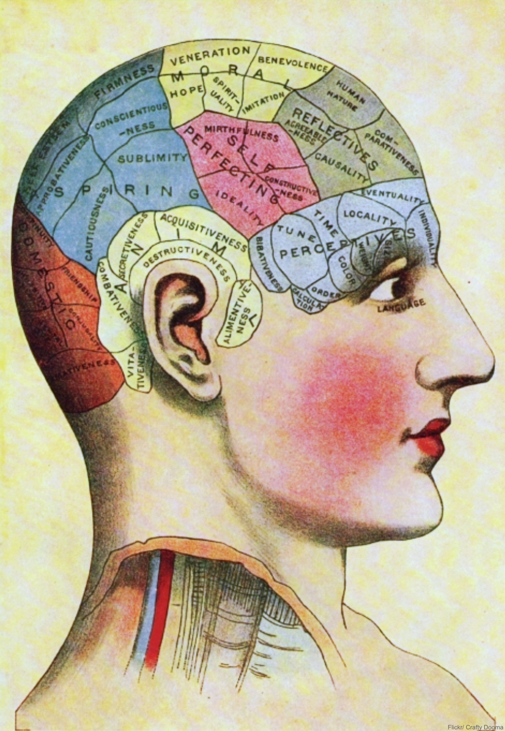 How Did Phrenology Become a 19th Century Craze?