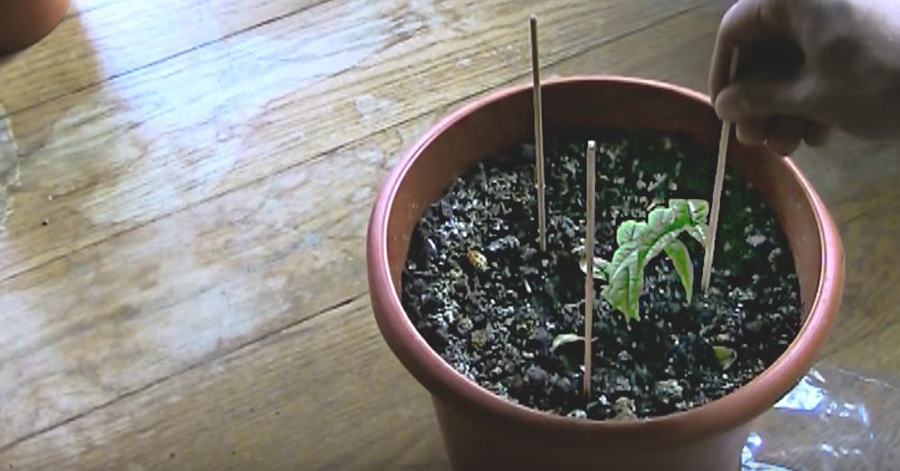 plant-hack