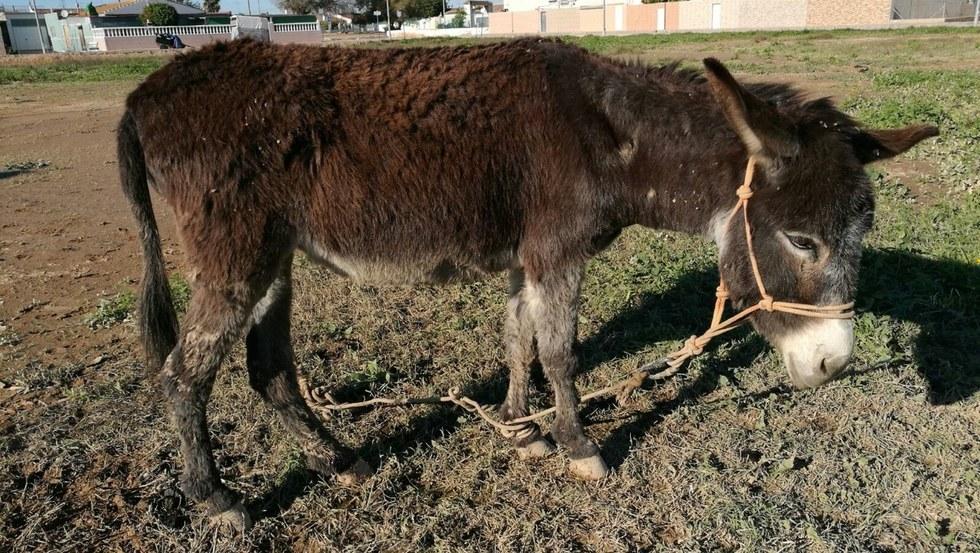 Easy Horse Care Rescue Center