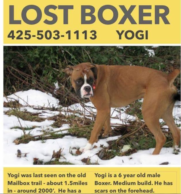 The poster that flooded social media after Yogi's disappearance