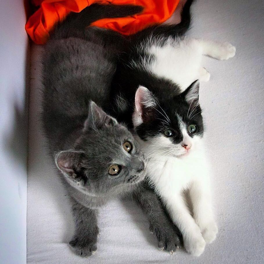 Chatons Orphelins Montreal