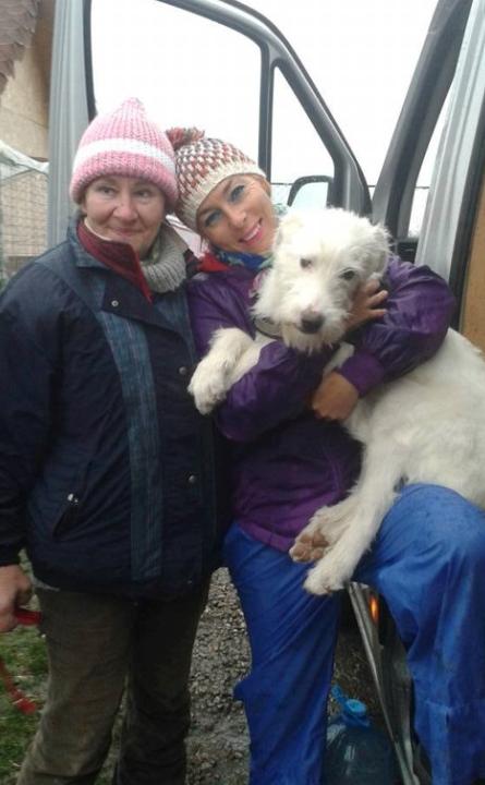 Amicii Dog Rescue
