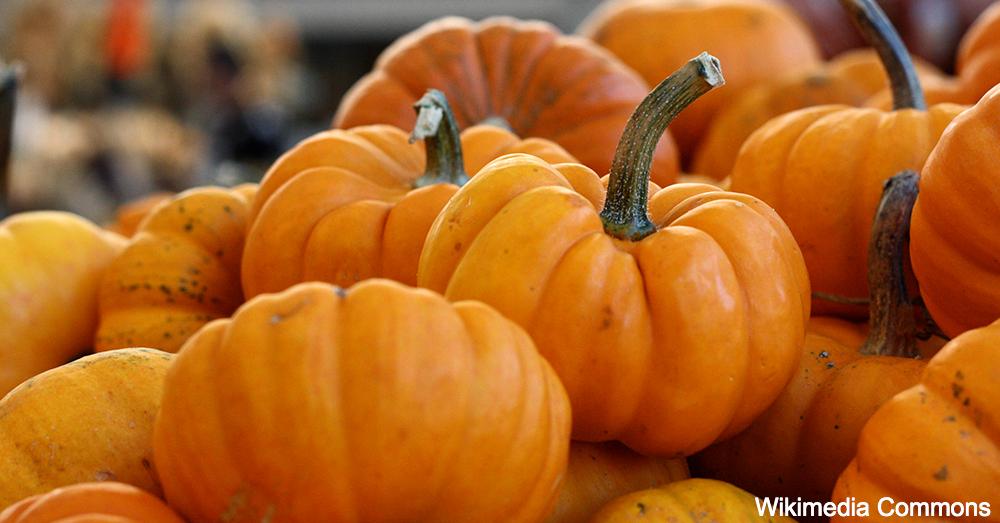kong-foods-pumpkin