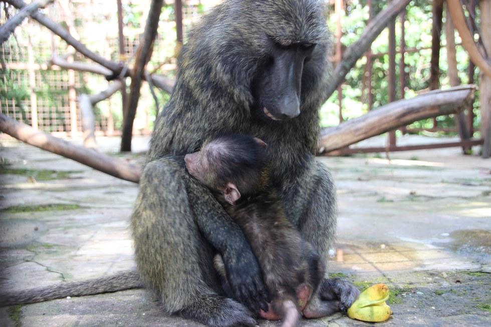 Centre de Rehabilitation des Primates de Lwiro