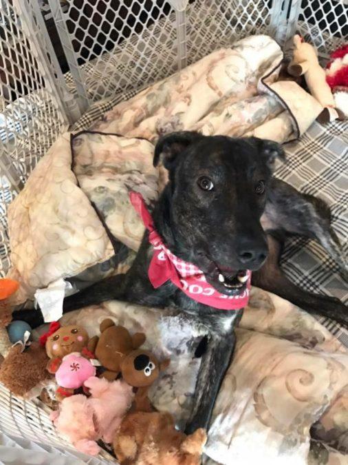 Facebook/New Life Animal Rescue